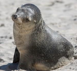 Seal Bay, Kangaroo Island, SA