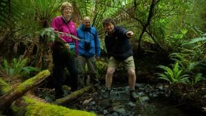 TAS - Pennicott Wilderness Journeys -Rainforest